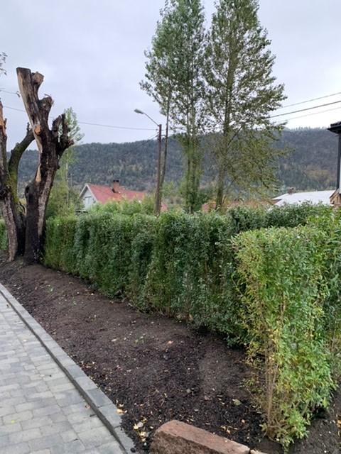Liguster liga Drammen (Solbergelva)